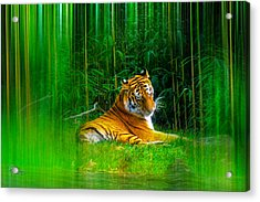 Acrylic Print featuring the photograph Tigers Misty Lair by Glenn Feron