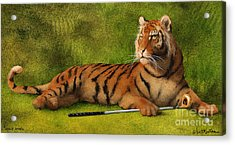 Tigers Woods... Acrylic Print by Will Bullas