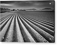 Tillage Acrylic Print by Dominique Dubied