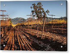 Tilling The Vineyards Acrylic Print by Kent Sorensen