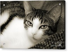 Tilly Little Miss Attitude Acrylic Print by Andee Design