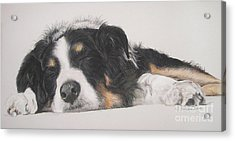 Tim Acrylic Print by Joanne Simpson