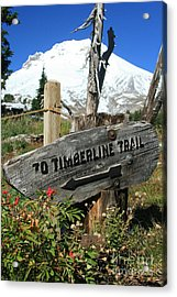 Timberline Trail Acrylic Print by Cari Gesch