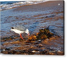 Time For A Drink Acrylic Print