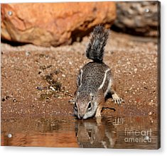 Time For A Drink Acrylic Print by Ruth Jolly