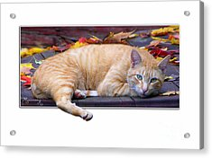 Acrylic Print featuring the photograph Time For Lunch Yet? by Mariarosa Rockefeller