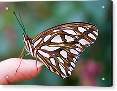Acrylic Print featuring the photograph Time To Fly by Priya Ghose