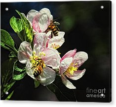 Time To Make The Honey Acrylic Print