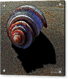 Time To Settle In Acrylic Print by Scott Allison