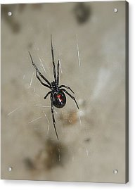 Acrylic Print featuring the photograph Time To Wait by Marie Neder