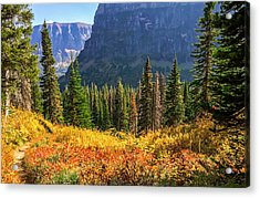 Timeless Colors Of Nature Acrylic Print by Rohit Nair