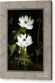 Acrylic Print featuring the photograph Timeless Two by Darla Wood