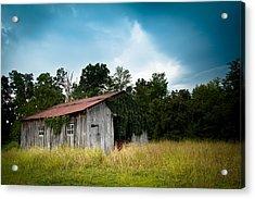 Tin Roof...ivy Covered Barn Acrylic Print by Shane Holsclaw