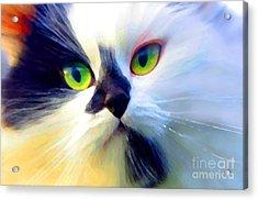 Tinker Acrylic Print by Adria Trail