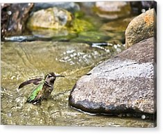 Acrylic Print featuring the photograph Tiny Bather by Priya Ghose