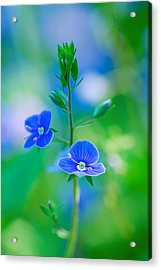 Tiny Bloom Acrylic Print