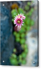 Acrylic Print featuring the photograph Tiny Blossom by Erin Kohlenberg