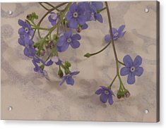 Acrylic Print featuring the photograph Tiny Blue by Sandra Foster