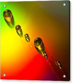Tiny Bubbles Acrylic Print