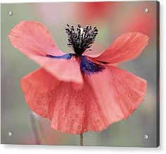 Tiny Dancer Acrylic Print by Colleen Williams