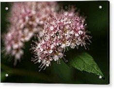 Tiny Flowers Acrylic Print