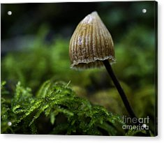 Tiny Acrylic Print by Inge Riis McDonald