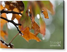 Tiny Leaf Acrylic Print by Barbara Shallue