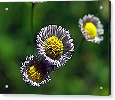 Tiny Little Weed Acrylic Print