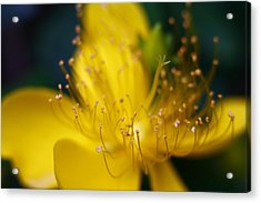Acrylic Print featuring the photograph Tiny Machine 8 by Afrison Ma