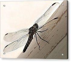 Acrylic Print featuring the photograph Tiny Magnificence  by Micki Findlay
