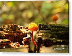Tiny Mushroom Acrylic Print by Melissa Petrey