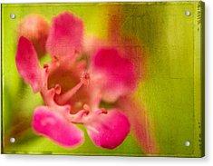 Tiny Pink Acrylic Print by Takeshi Okada