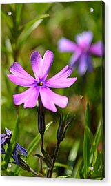 Tiny Purple Flower #1 Acrylic Print