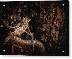 Tiny Sparrow Huge Tree Acrylic Print by Bob and Nadine Johnston