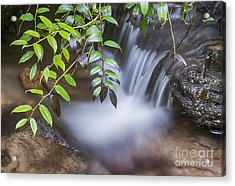 Tiny Waterfall Acrylic Print