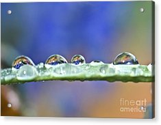 Tiny Waterworld And A Leaf Acrylic Print by Heiko Koehrer-Wagner