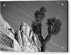 Tips Acrylic Print by Peter Tellone