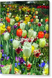 Tiptoe Through The Tulips Acrylic Print