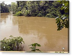 Tiputini River, Ecuador Acrylic Print by Science Photo Library