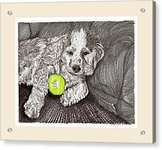 Tired Puppy Acrylic Print by Jack Pumphrey