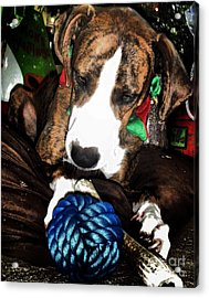 Acrylic Print featuring the photograph 'tis Better To Receive by Robert McCubbin