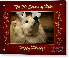 'tis The Season Of Hope Happy Holidays Acrylic Print by Lois Bryan