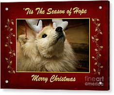 'tis The Season Of Hope Merry Christmas Acrylic Print by Lois Bryan