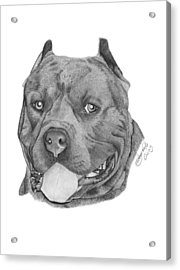 Acrylic Print featuring the drawing Titus - 024 by Abbey Noelle