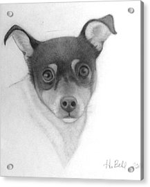 Tizzy Acrylic Print by Holly Bell