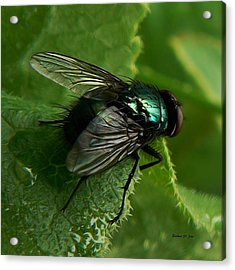 To Be The Fly On The Salad Greens Acrylic Print