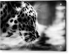 Too Close Acrylic Print by Mark Hazelton