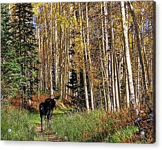 To Hike With A Moose Acrylic Print by Gene Praag