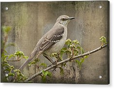 To Still A Mockingbird Acrylic Print