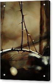 To Taste The Earth Acrylic Print by Rebecca Sherman